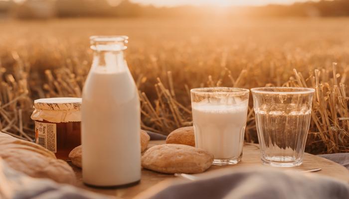 Jarra de leite ao lado de dois copos sobre a mesa, ao fundo gramado de uma fazenda. Leite de vaca é um dos alimentos mais nutritivos e ricos em proteínas.